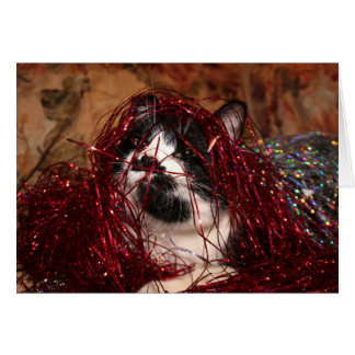Naughty tuxedo kitty Christmas Card