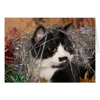 Naughty tuxedo kitty Christmas Card