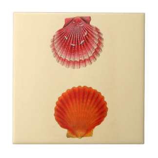 Nautical Theme Ceramic Wall Tiles Clam Shells