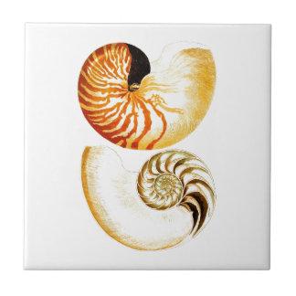 Nautilus Shell Seashell no.8 Beach Decor Art Tile