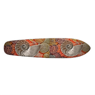 Nautilus Shells Skate Boards