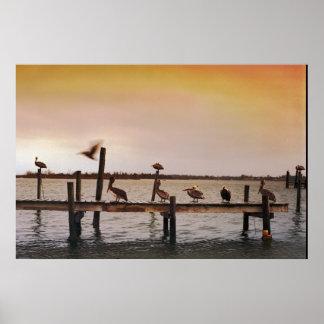 NC Pelicans Poster