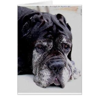 neapolitan mastiff.png card