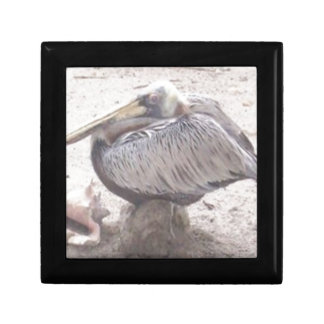 Neat Pelican with Shell Gift Box