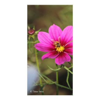 nectar of life (honey of life) cosmos and bees customized photo card