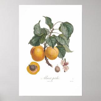 Nectarine Poster