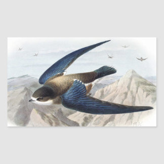 Needle-tailed Swift Sticker