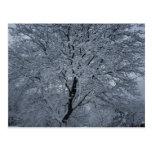 Neige d'hiver sur un arbre cartes postales