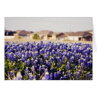 Neighborhood full of bluebonnets greeting card