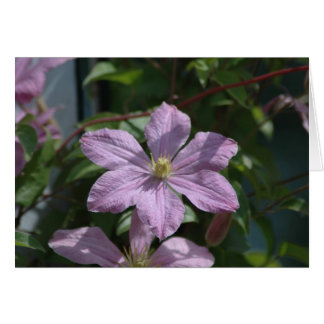 Nelly Moser Clematis 2009 Greeting Cards