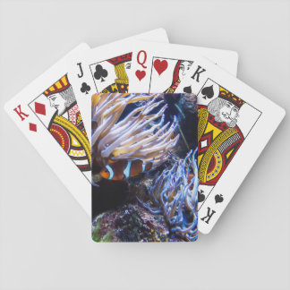 Nemo Clown Fish Playing Cards