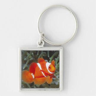 nemo fish Silver-Colored square keychain