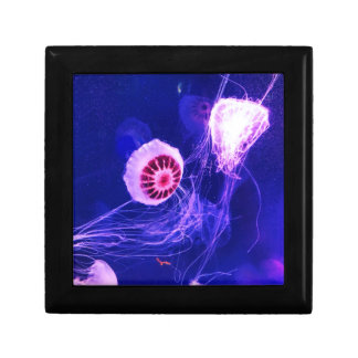 Neon Luminous Jellyfish Gift Box