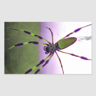 Neon Purple and Green Spider
