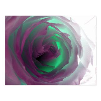 Neon Rose Photograph Postcard
