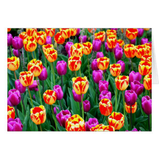 Neon Tulips Card for Any Occasion