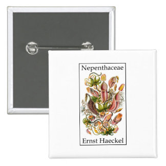 Nepenthaceae by Ernst Haeckel 2 Inch Square Button