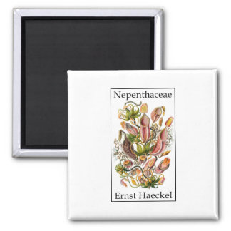 Nepenthaceae by Ernst Haeckel Square Magnet