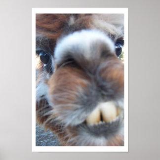 Nerdy Llama Poster