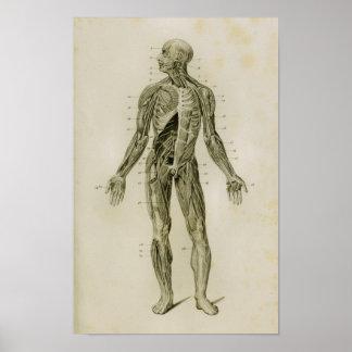 Nervous System Human Vintage Anatomy Print