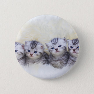 Nest with four young tabby cats in a row 2 inch round button