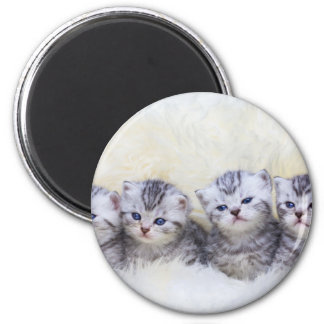 Nest with four young tabby cats in a row 2 inch round magnet
