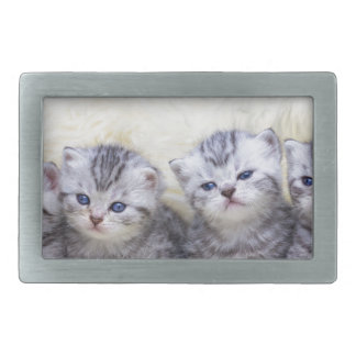 Nest with four young tabby cats in a row belt buckles