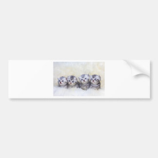Nest with four young tabby cats in a row bumper sticker
