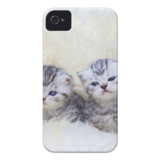 Nest with four young tabby cats in a row Case-Mate iPhone 4 case