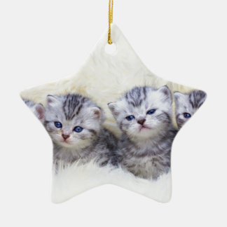 Nest with four young tabby cats in a row ceramic ornament