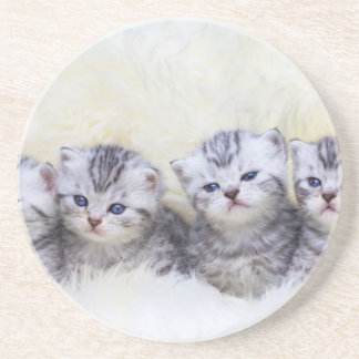 Nest with four young tabby cats in a row coaster