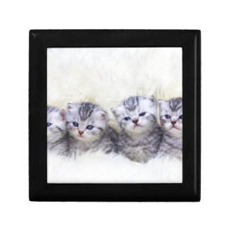 Nest with four young tabby cats in a row gift box