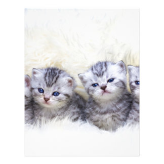 Nest with four young tabby cats in a row letterhead