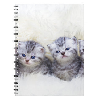 Nest with four young tabby cats in a row note books