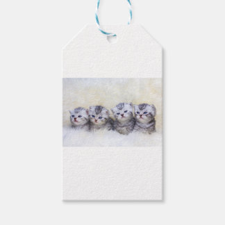 Nest with four young tabby cats in a row pack of gift tags