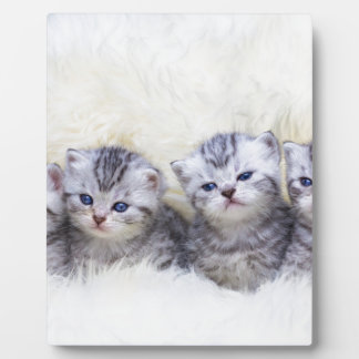 Nest with four young tabby cats in a row plaque
