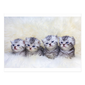 Nest with four young tabby cats in a row postcard