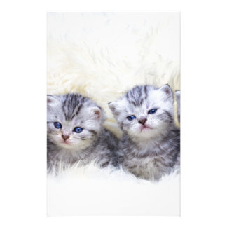 Nest with four young tabby cats in a row stationery