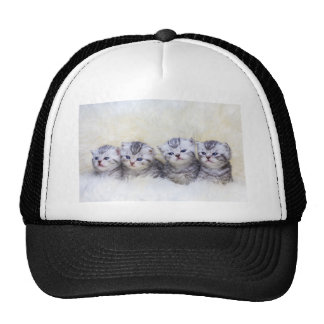 Nest with four young tabby cats in a row trucker hat