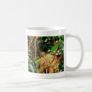 Nesting - birds of Brazil Classic White Coffee Mug