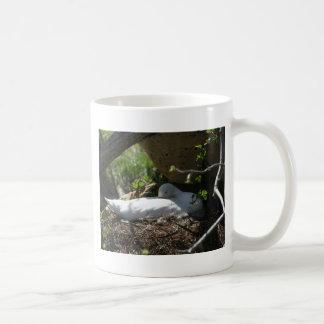 Nesting Coscoroba Swan Coffee Mugs