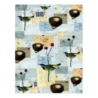 Nests and small birds postcard