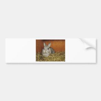 Netherland Dwarf Rabbit Bumper Sticker