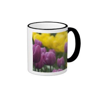 Netherlands aka Holland), Lisse. Keukenhof 10 Ringer Coffee Mug