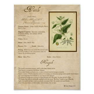 NETTLE MAGICK HERB POSTER