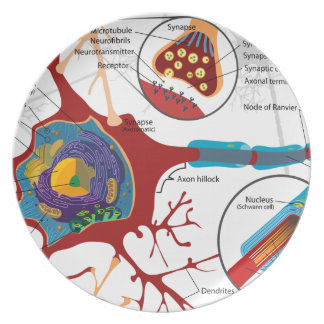 Neurons Nerve Healthy Party Plate