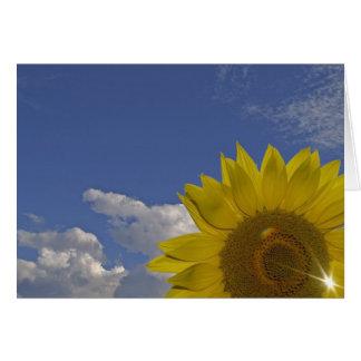 neutral greeting map sunbeams card