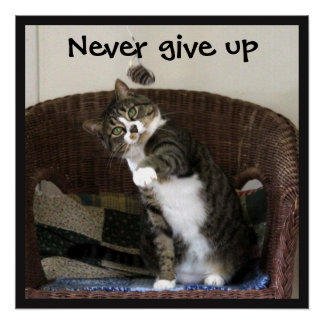 Never Give Up - Cat Chasing Mouse Perfect Poster