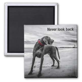 Never look back magnet