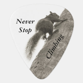 Never Stop Climbing Black and White Squirrel Pick